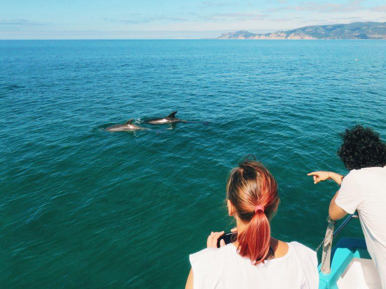 Golfinhos em Setúbal