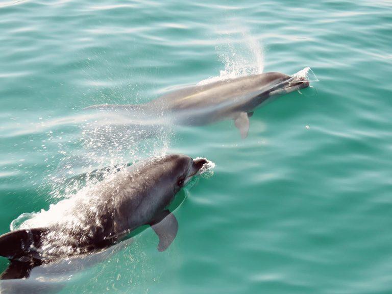Ver Golfinhos Setúbal